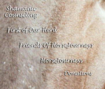 Horses and Shamanism, Counseling, Consulting